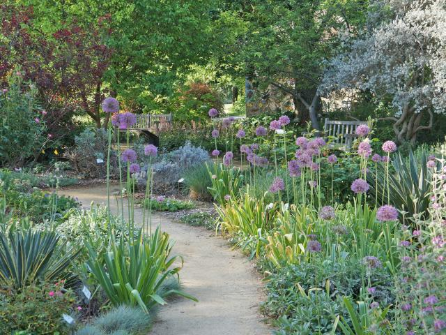 Image of the Ruth Risdon Storer Garden -- a Valley-wise demonstration garden